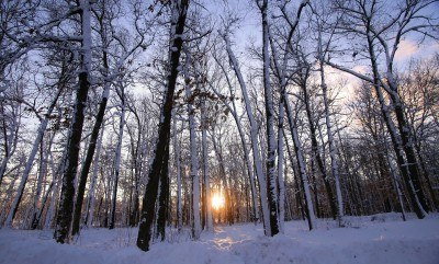 2426481-winter-sun-set-through-trees