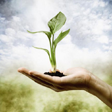 plant-hand